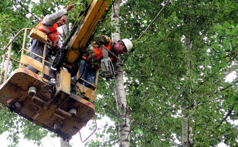 ОАО «Жилищник» продолжает плановый снос аварийных деревьев