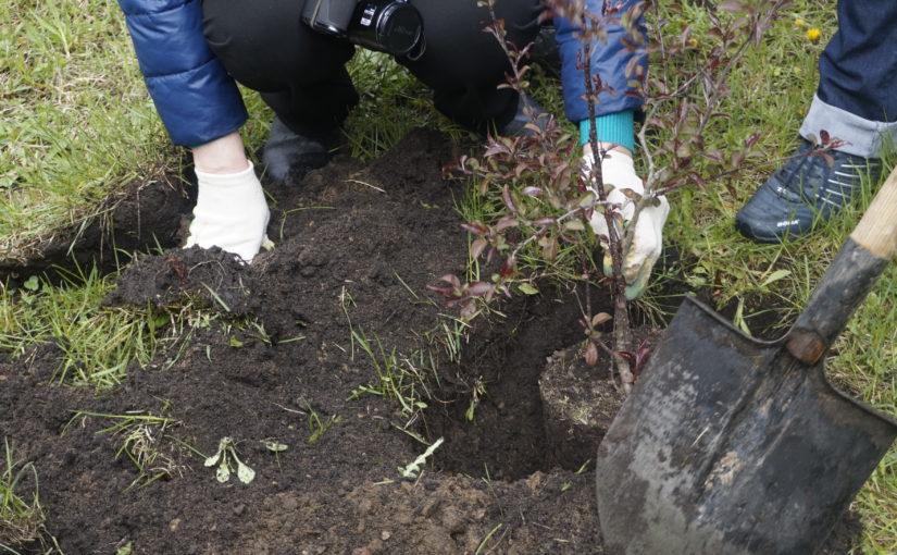 ОАО «Жилищник» приглашает смолян принять участие в акции по озеленению дворовых территорий